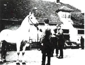 Záchrana koní v Hostouni